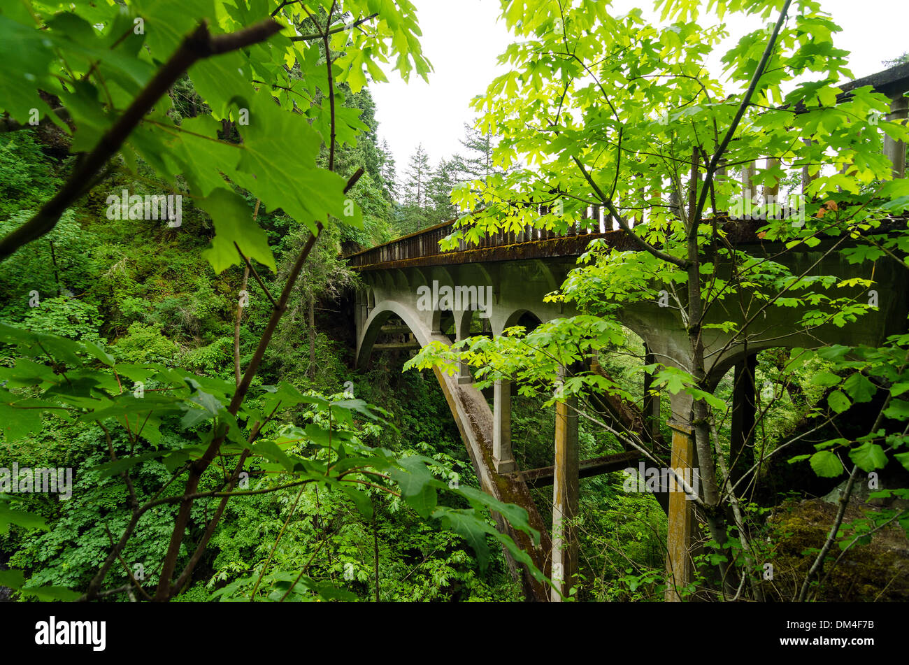 Bridge on historic Highway 30 running through the Columbia River Gorge and a lush green forest - Stock Image