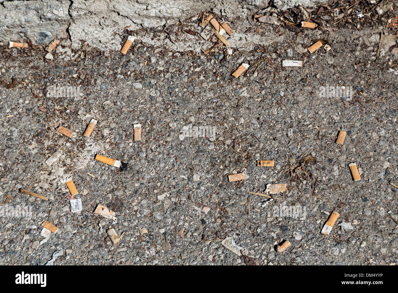 Discarded cigarette ends thrown away, Germany - Stock Image