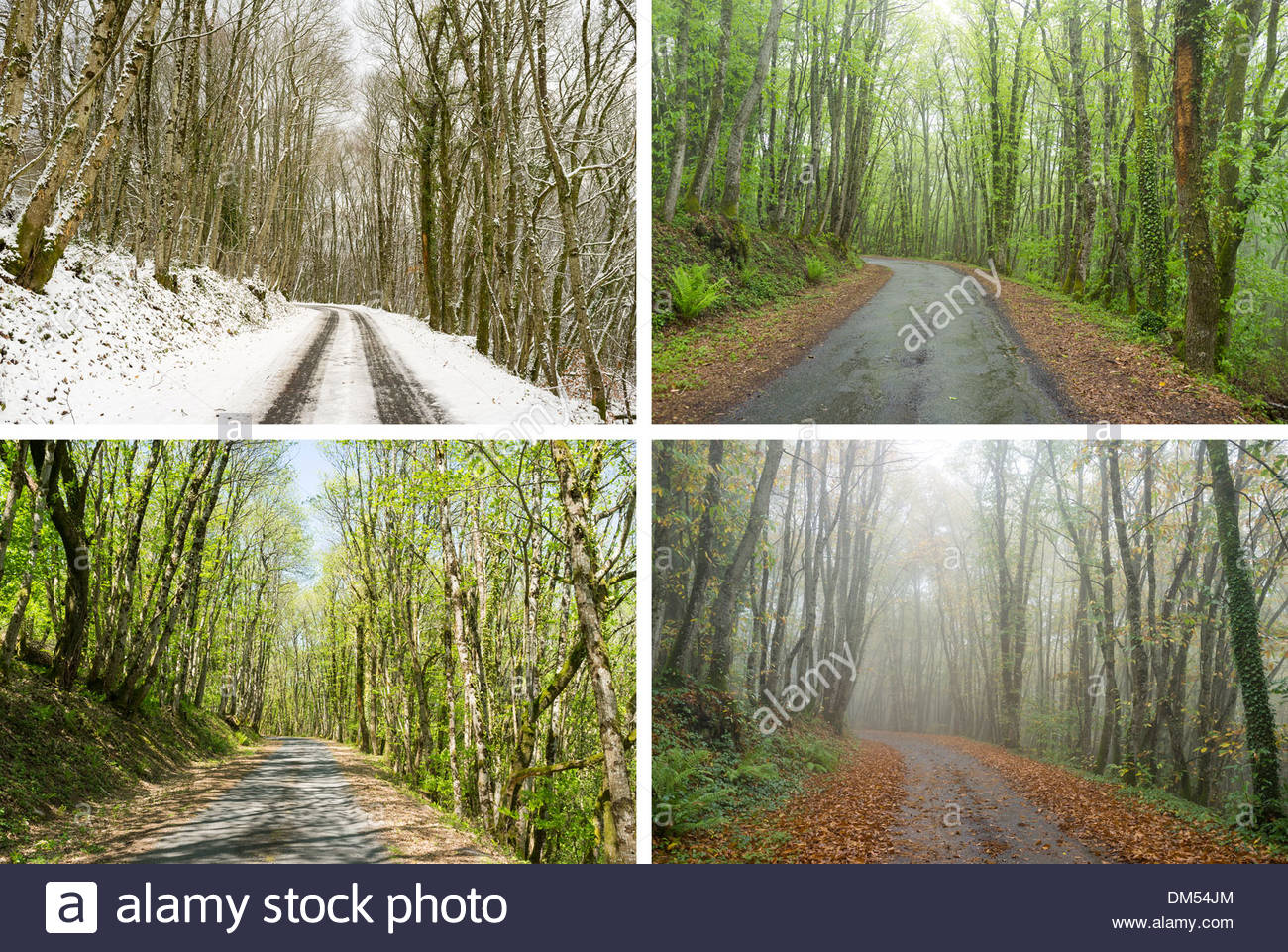 Country road through hardwood oak forest, composite image showing same scene in four seasons (Winter, Spring, Summer, Autumn) - Stock Image