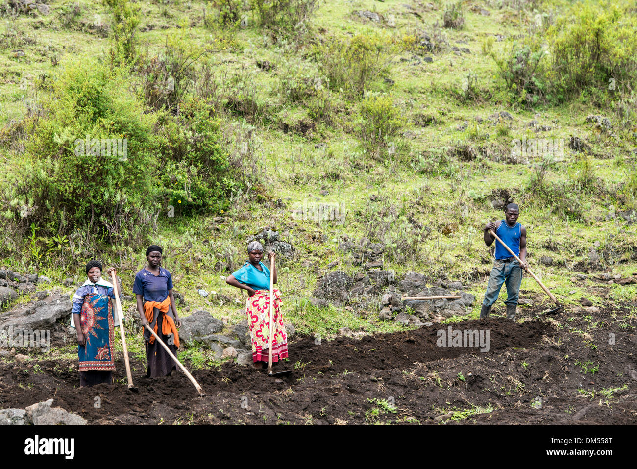 People working in the fields Volcanoes National Park Rwanda Africa - Stock Image