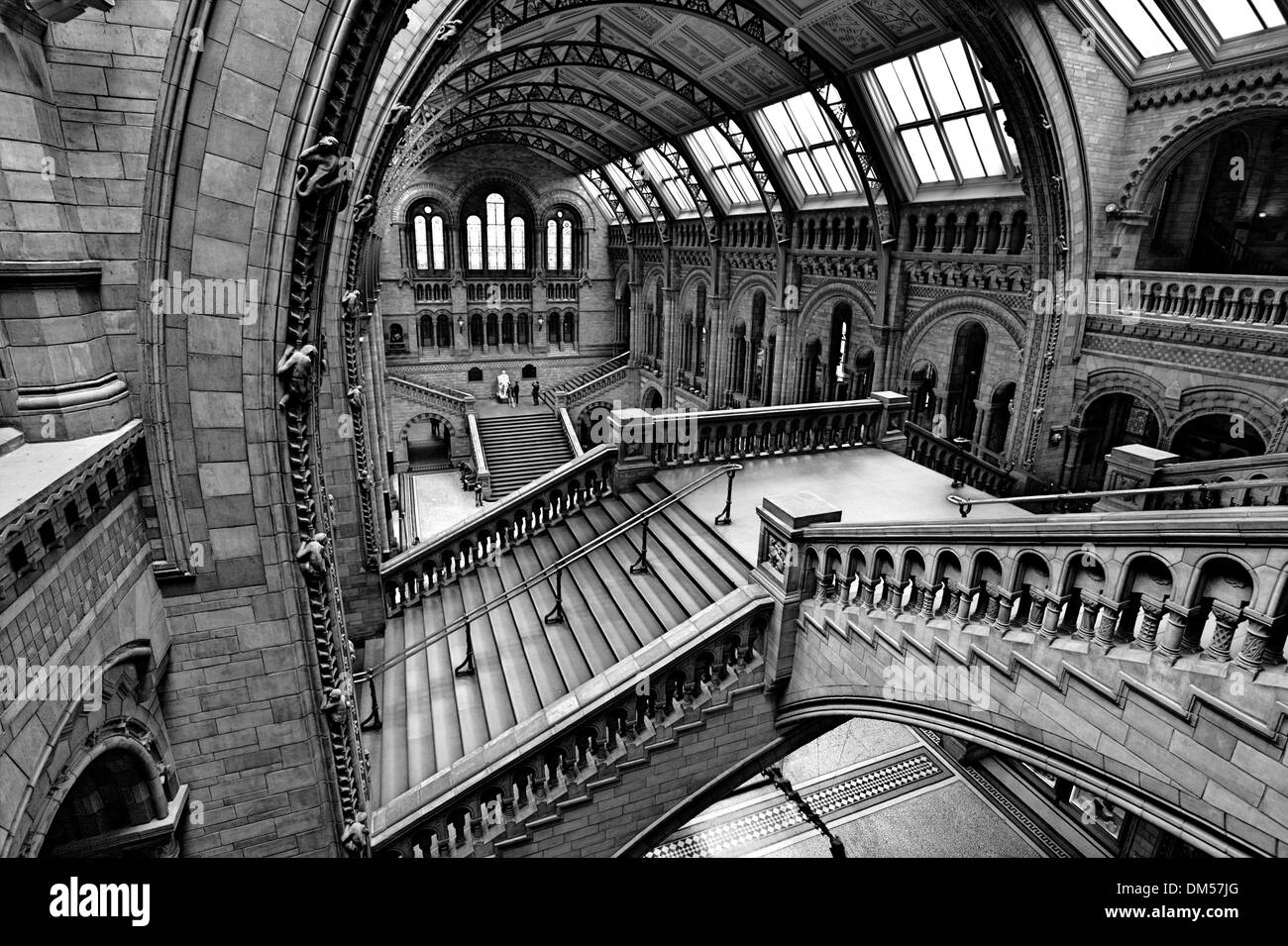 Natural History Museum, Interior. - Stock Image