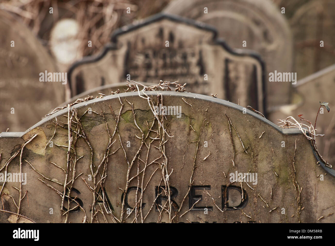 Gravestone with word 'Sacred' at the York Cemetery - Stock Image