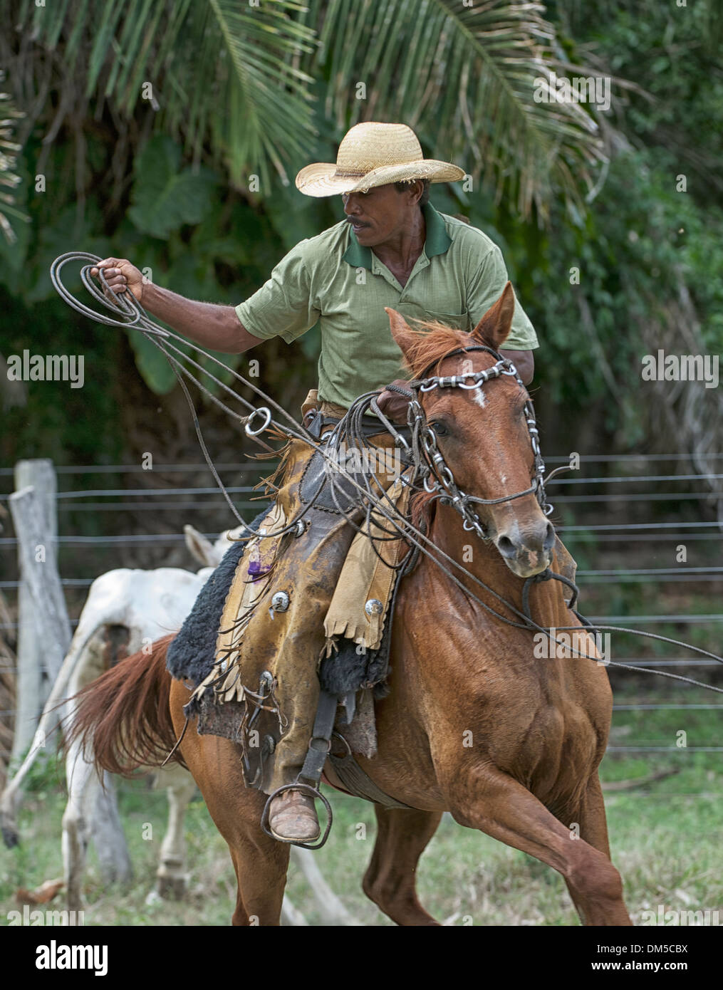Pantaneiro cowboy with lasso, The Pantanal, Mato Grosso, Brazil - Stock Image