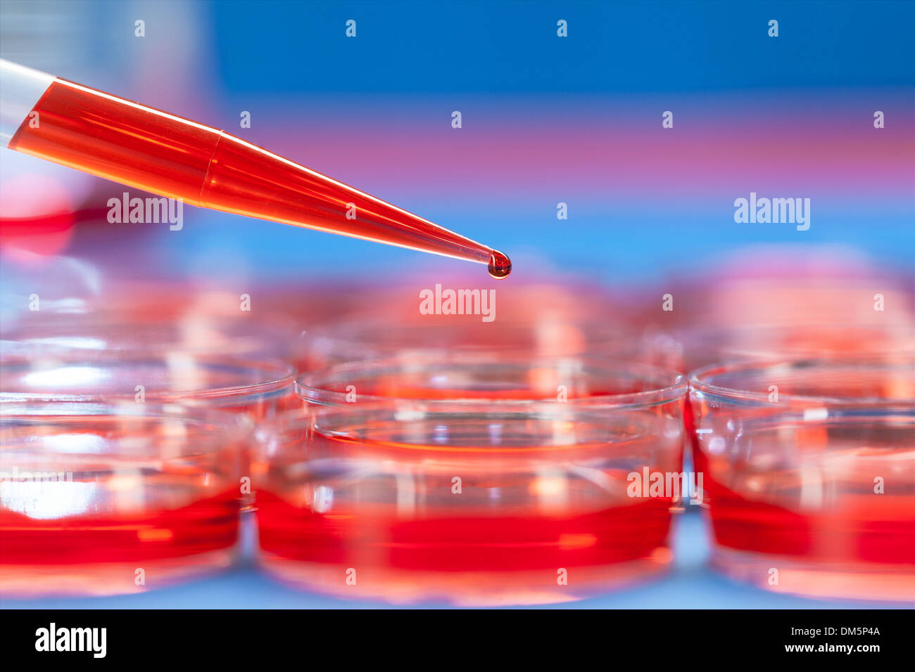 petri dishes and micropipette, pathogens test - Stock Image