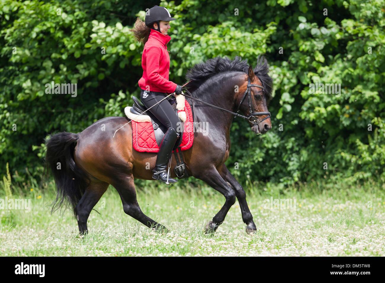 ponygirl riding