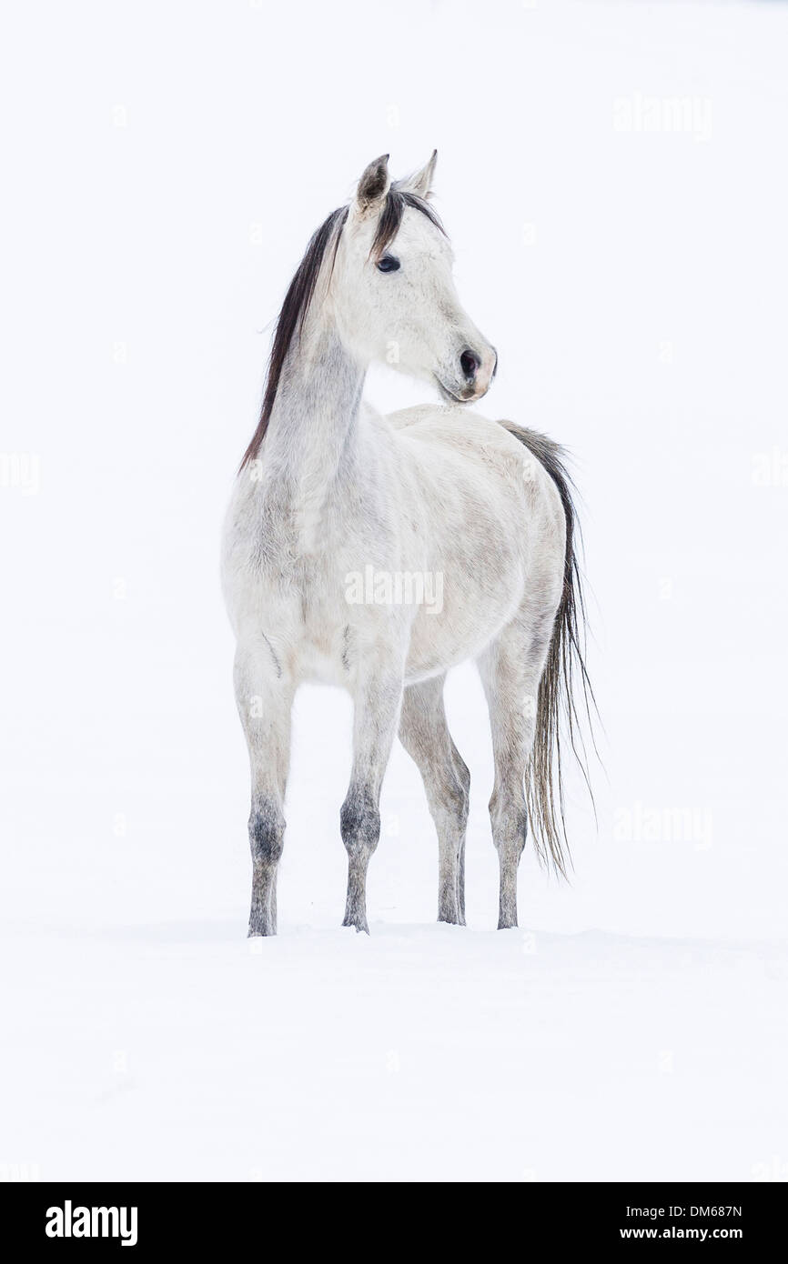 Equidae Cut Out Stock Images & Pictures - Alamy
