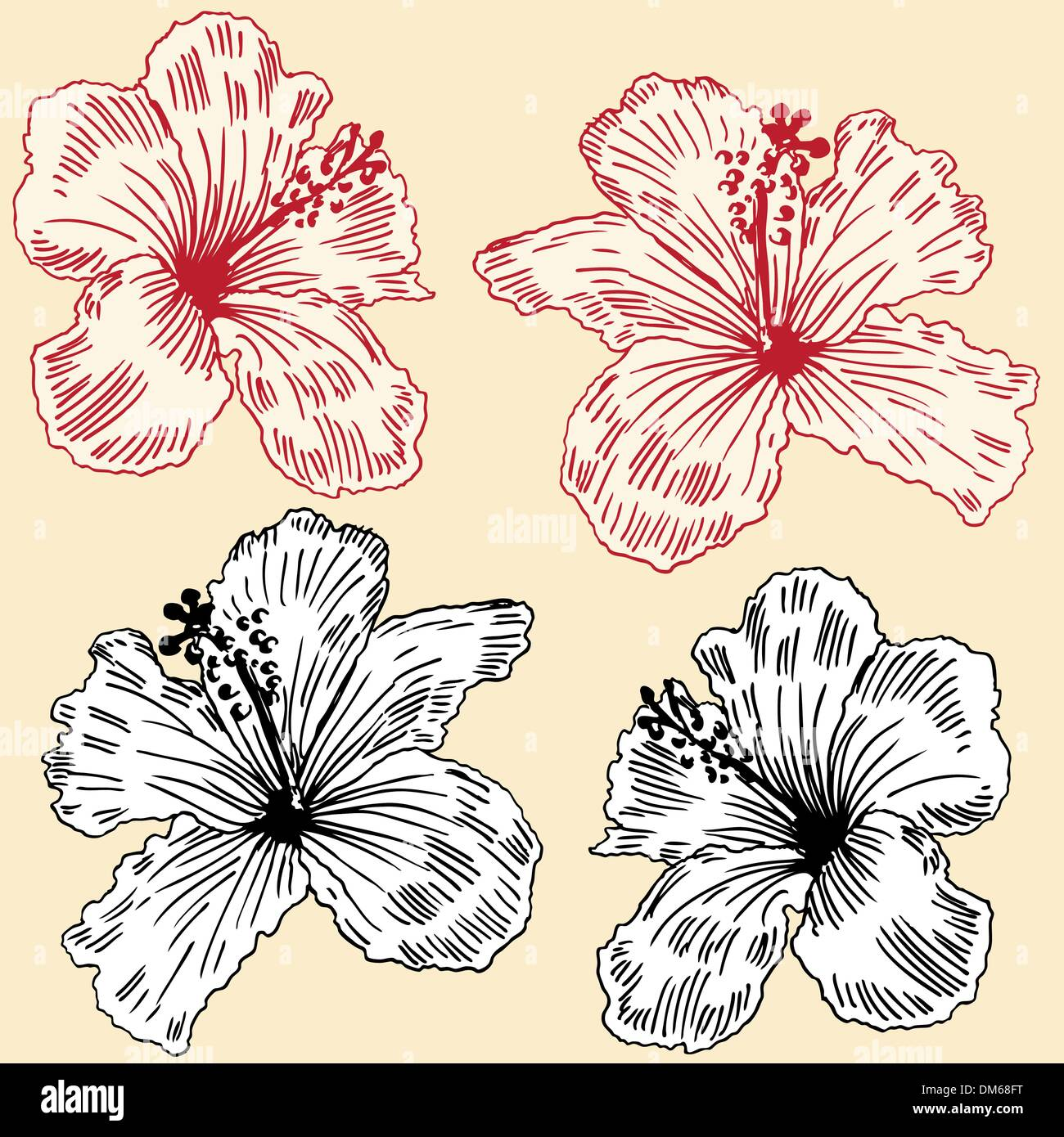 Hawaiian tropical flower arrangement stock vector images alamy dm68ft izmirmasajfo