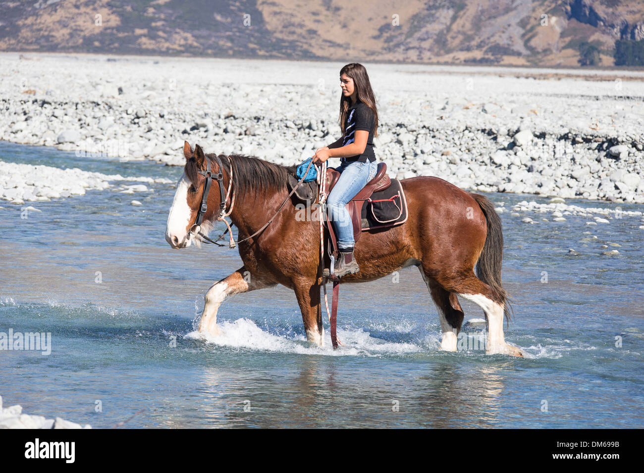 Horse Crossing River Stock Photos Amp Horse Crossing River
