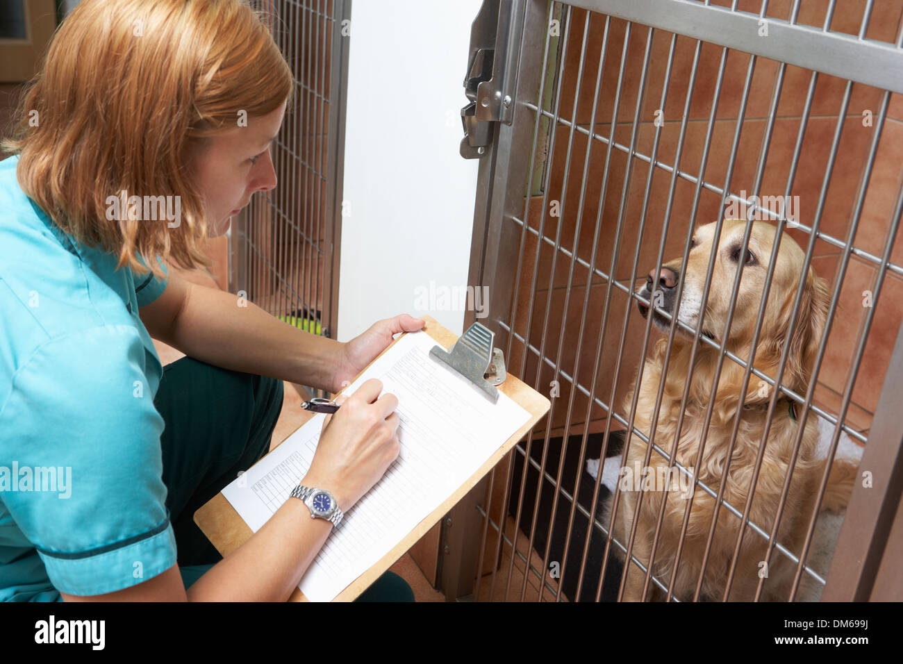 Veterinary Nurse Checking On Dog In Cage - Stock Image