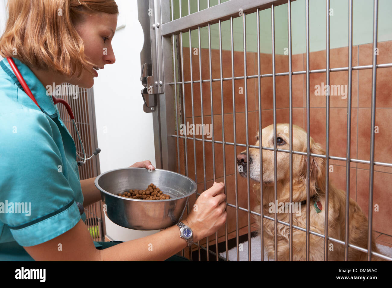 Veterinary Nurse Feeding Dog In Cage - Stock Image