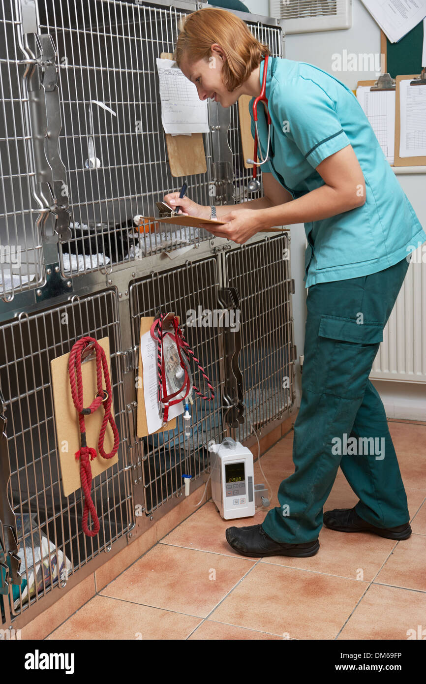 Veterinary Nurse Checking On Animals In Cages - Stock Image