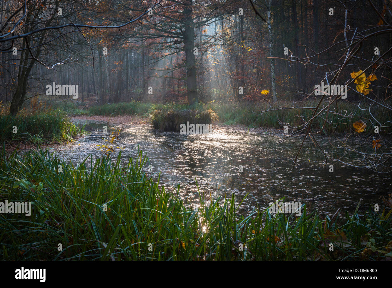 Forest pond, collapse sinkhole, Ettersberg, Weimar, Thuringia, Germany - Stock Image
