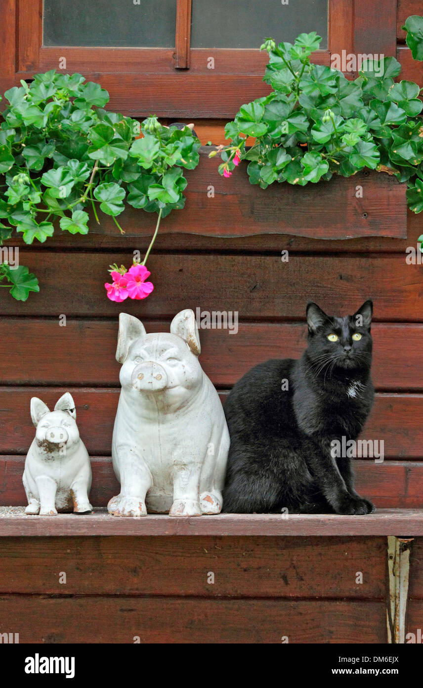 Cat Statues Stock Photos & Cat Statues Stock Images - Alamy