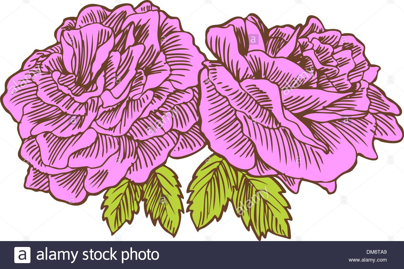 Line Drawing Of Rose Plant : Today my special art and drawing flowers capture b u steemit