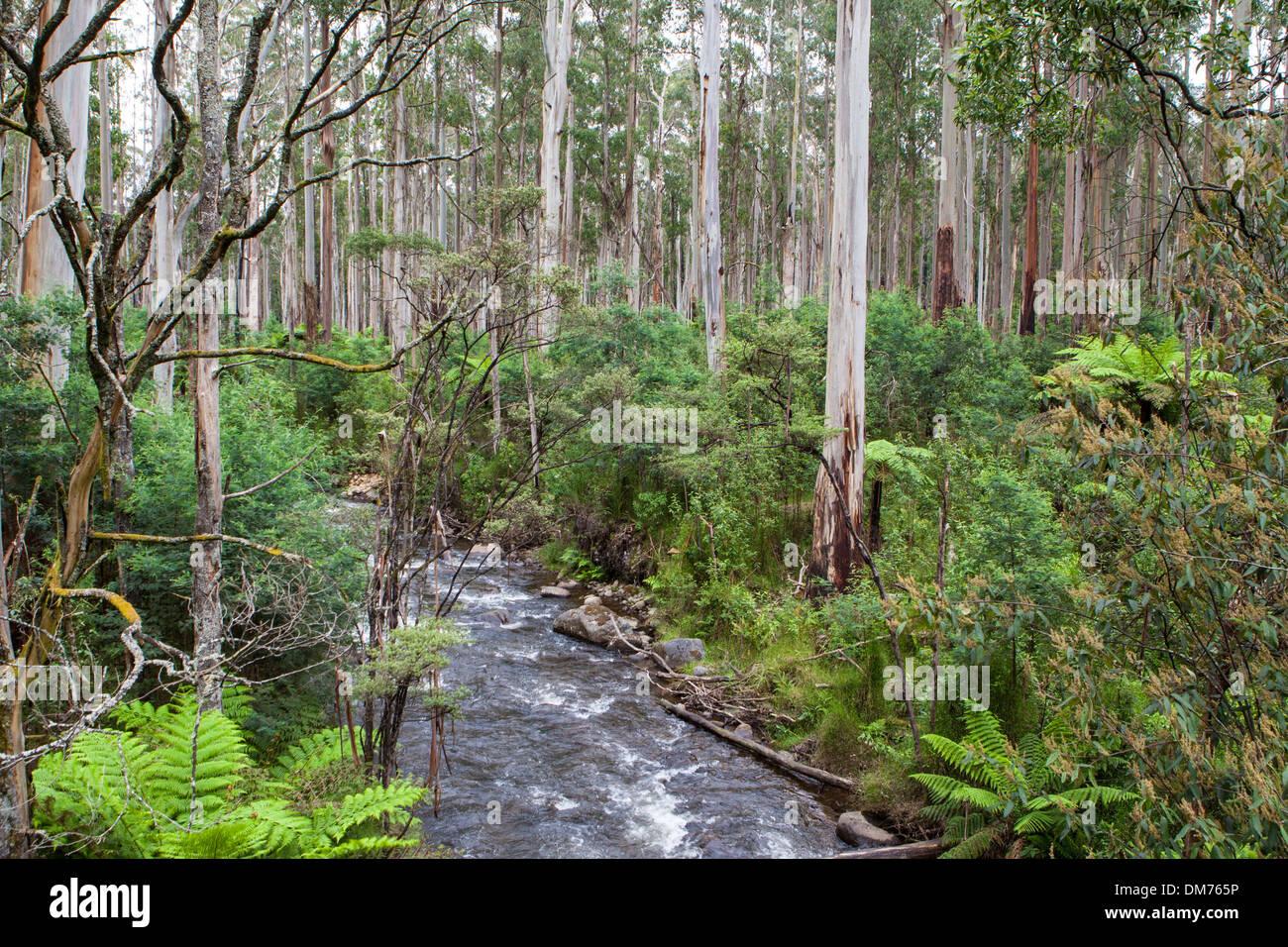 Healesville australia