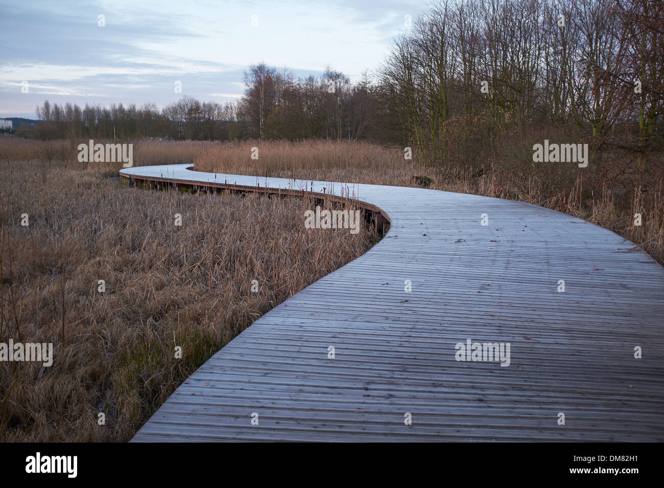 Wooden raised walkway through wetlands in The Helix park on the outskirts of Falkirk - Stock Image