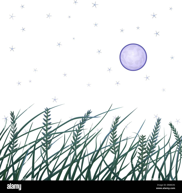 Night field - Stock Vector