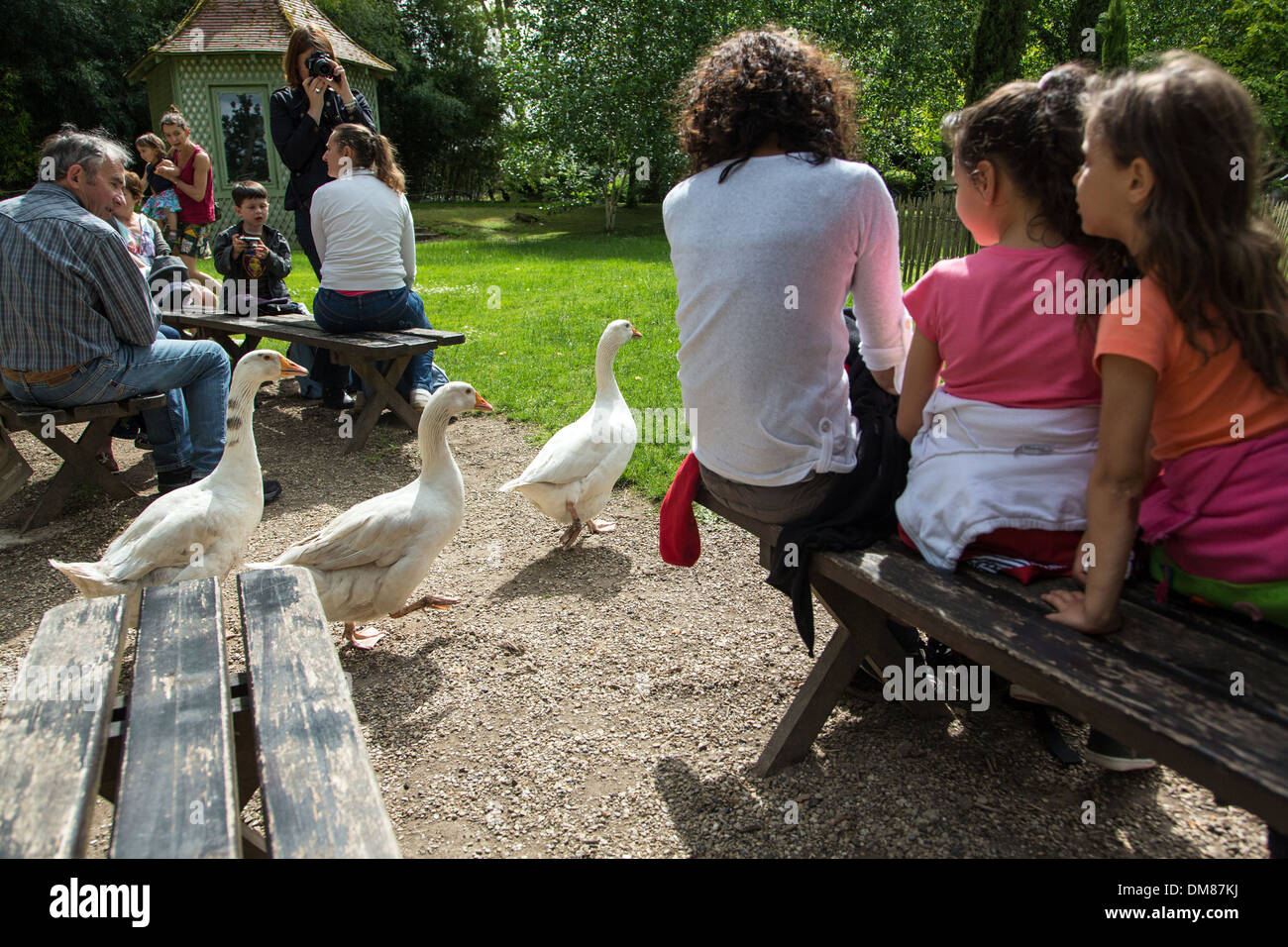 GEESE IN THE OLD-FASHIONED FARMYARD, FAMILY VISITING THE FARMYARD MUSEUM AT THE POTAGER DES PRINCES, CHANTILLY, - Stock Image