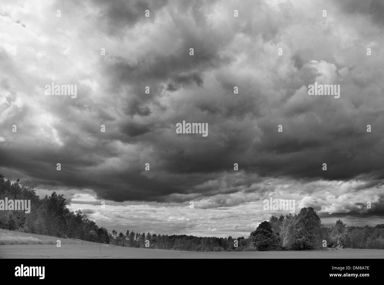 Storm clouds rolling over a grass field with forest in the background - Stock Image