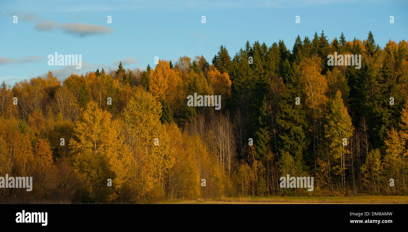Forest with colorful trees in autumn - Stock Image