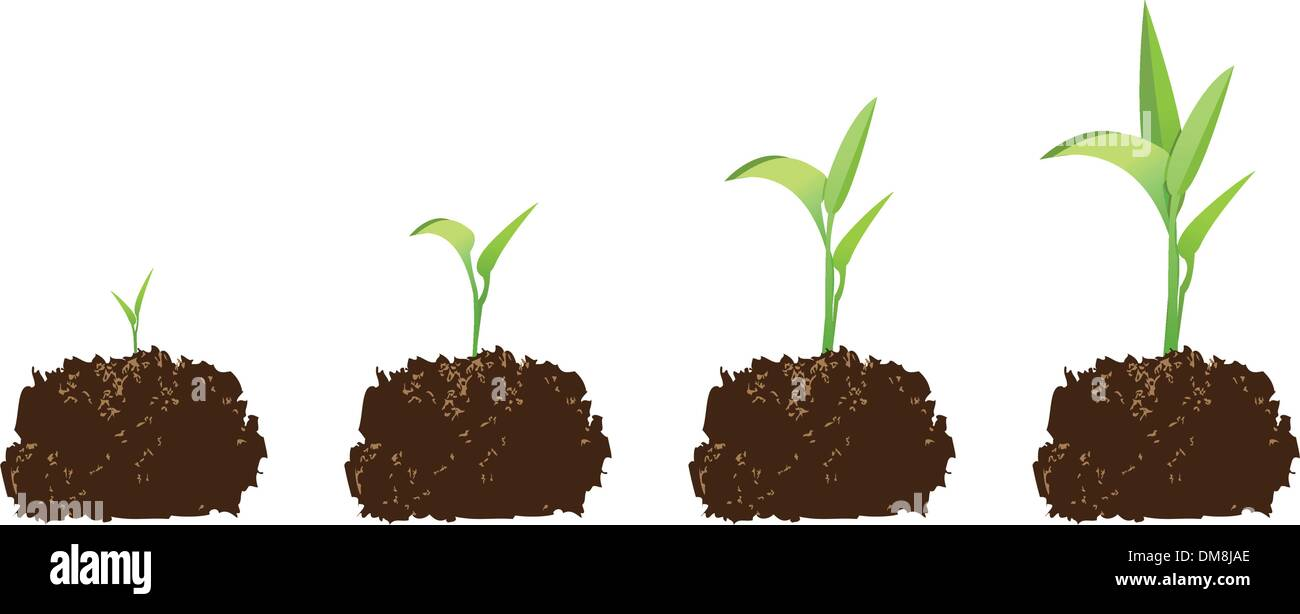 seedling or germination - Stock Vector