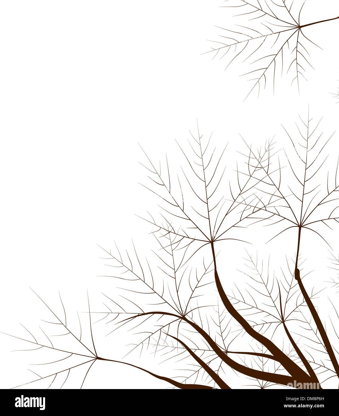 Japanese maple. - Stock Image
