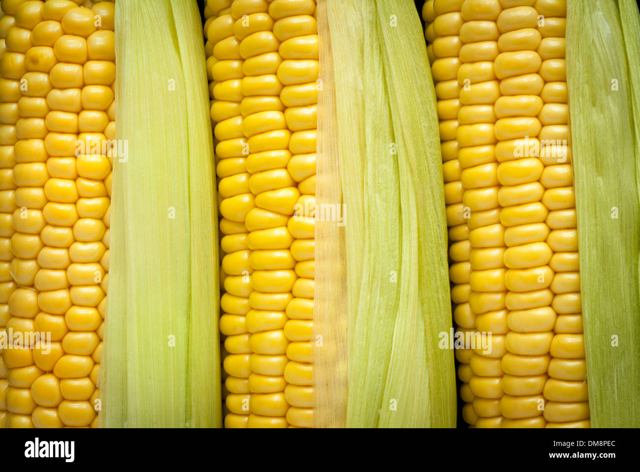 A closeup image of corn on the cob with husks. - Stock Image