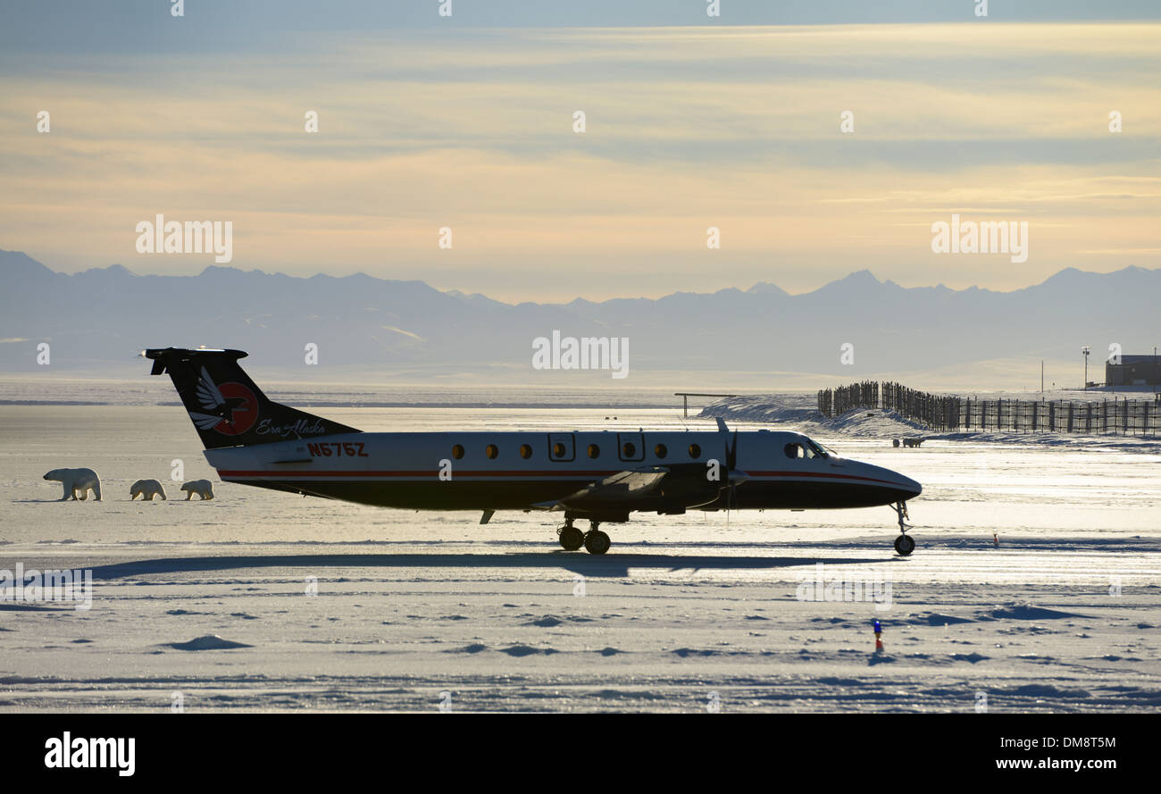 Airplane taxiing on Barter Island LRRS airport Kaktovik Alaska with polar bear sows and cubs on frozen Beaufort Sea and Brooks Range mountains - Stock Image