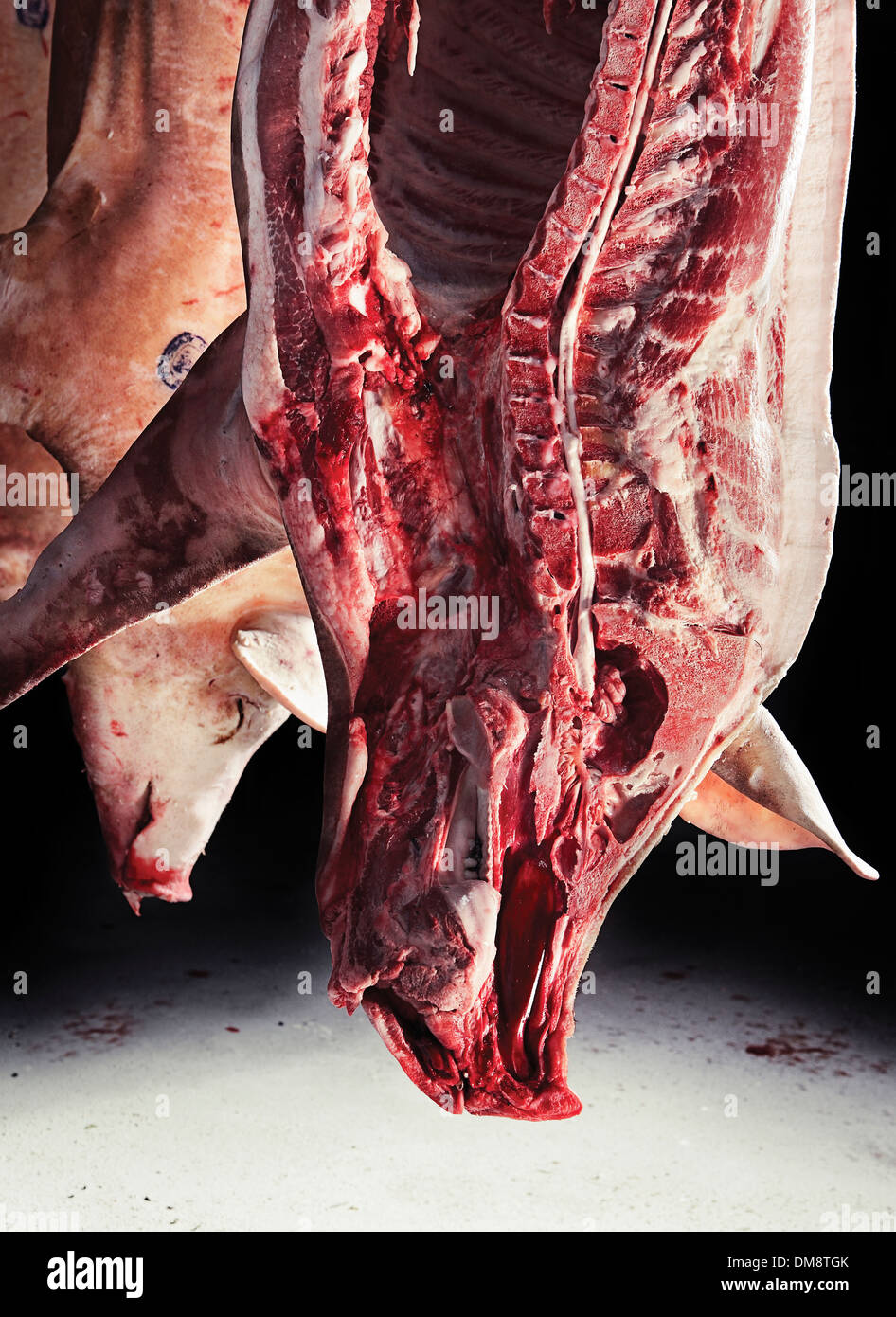 Slaughtered pig hanging - Stock Image