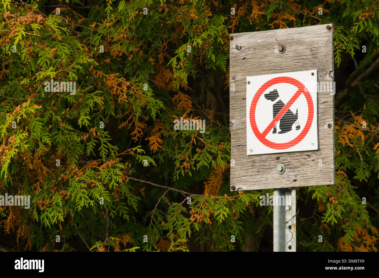 Sign for no dog littering - Stock Image
