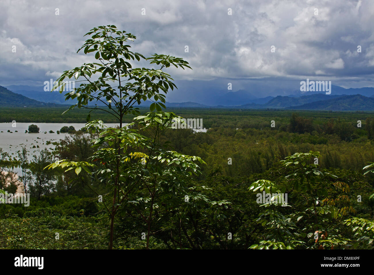 MANGROVE ECOSYSTEM near the ANDAMAN SEA - SOUTHERN THAILAND - Stock Image