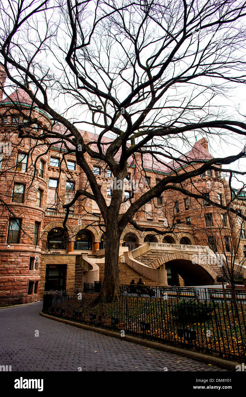The Museum of Natural History sits behind a tree in New York City on 10 January 2013. - Stock Image