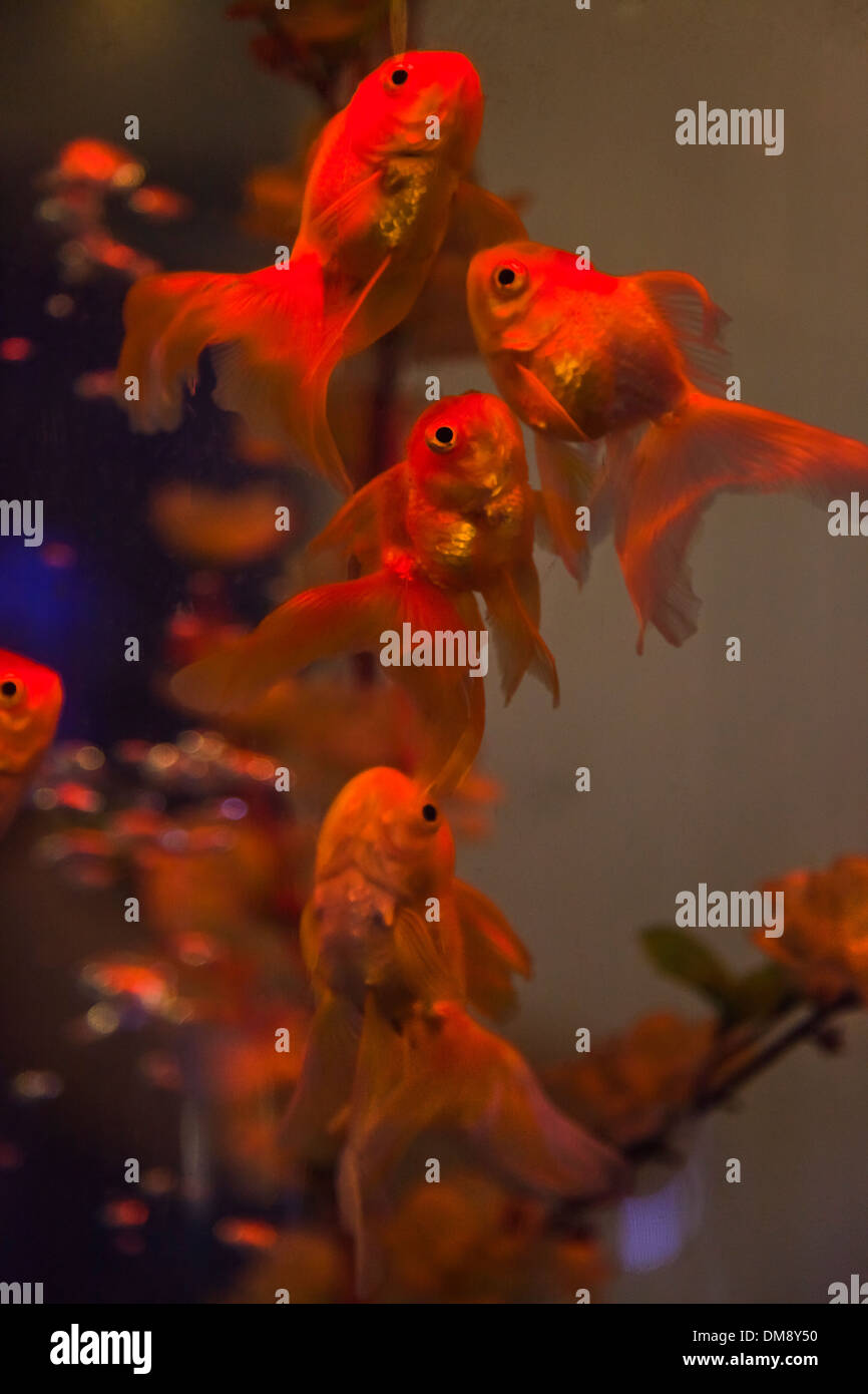 Tropical Fish Tanks Stock Photos & Tropical Fish Tanks Stock Images ...