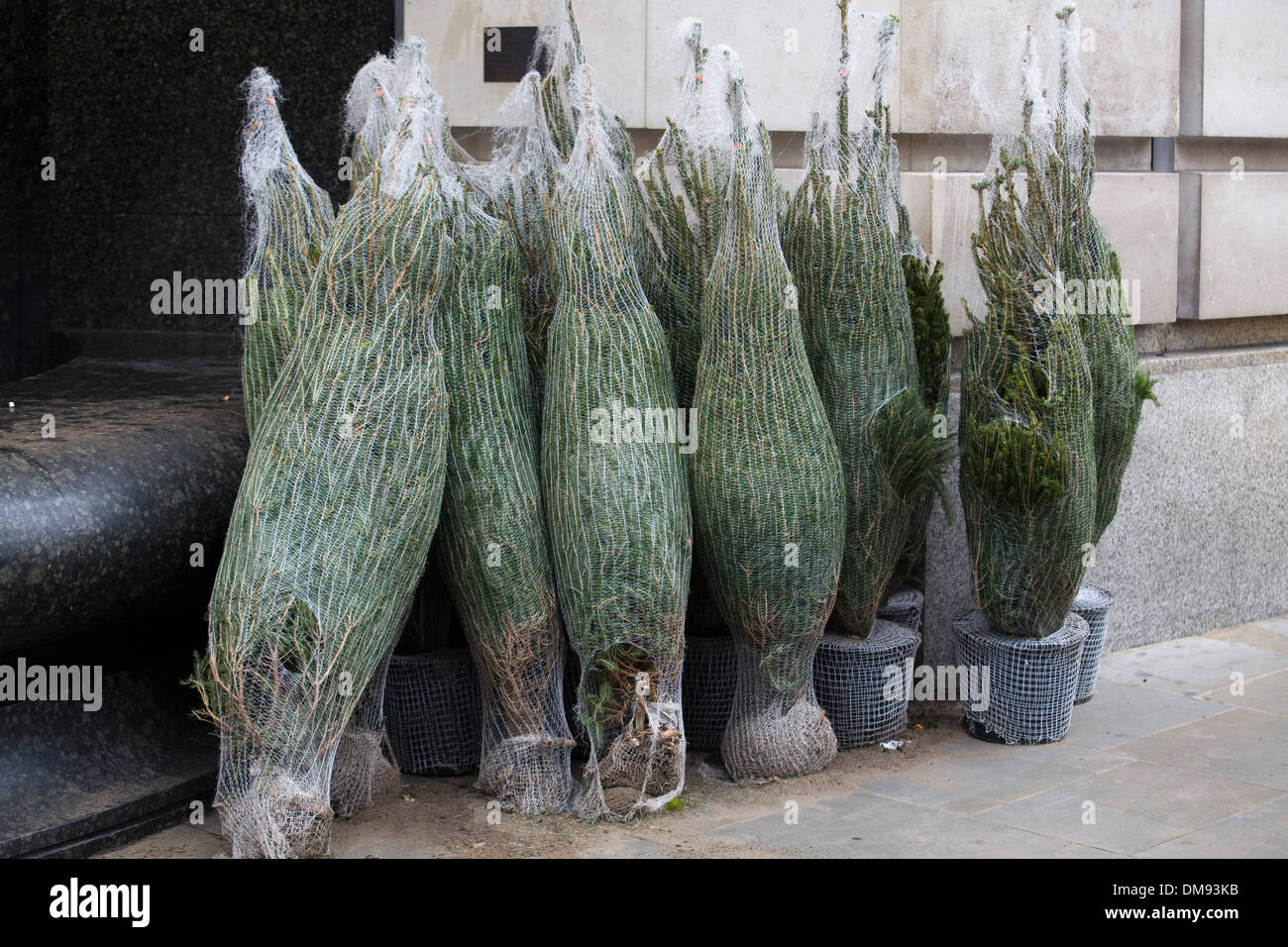 Christmas Trees In Netting On Sale On The Streets Of London England