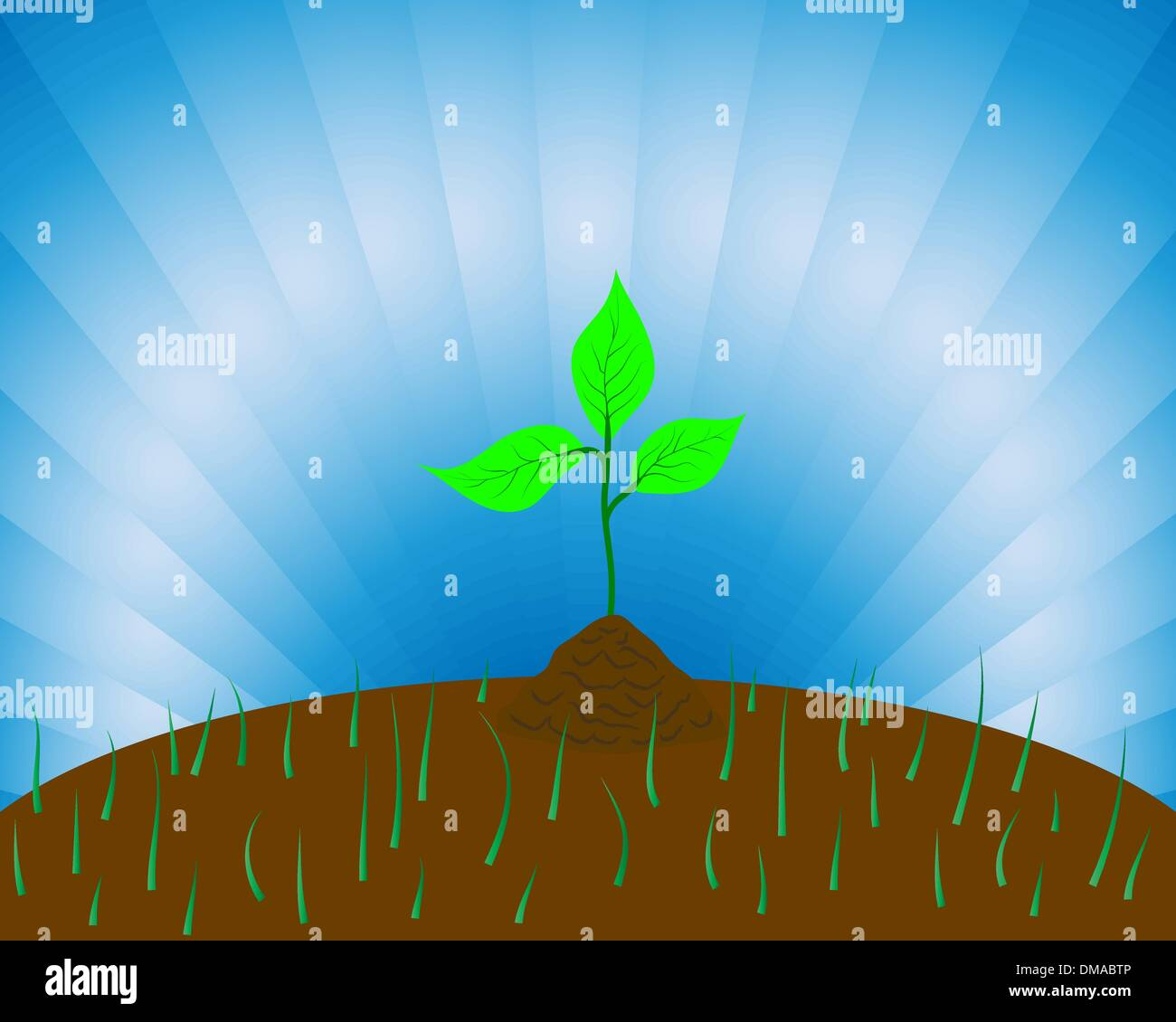 sprouts - Stock Vector