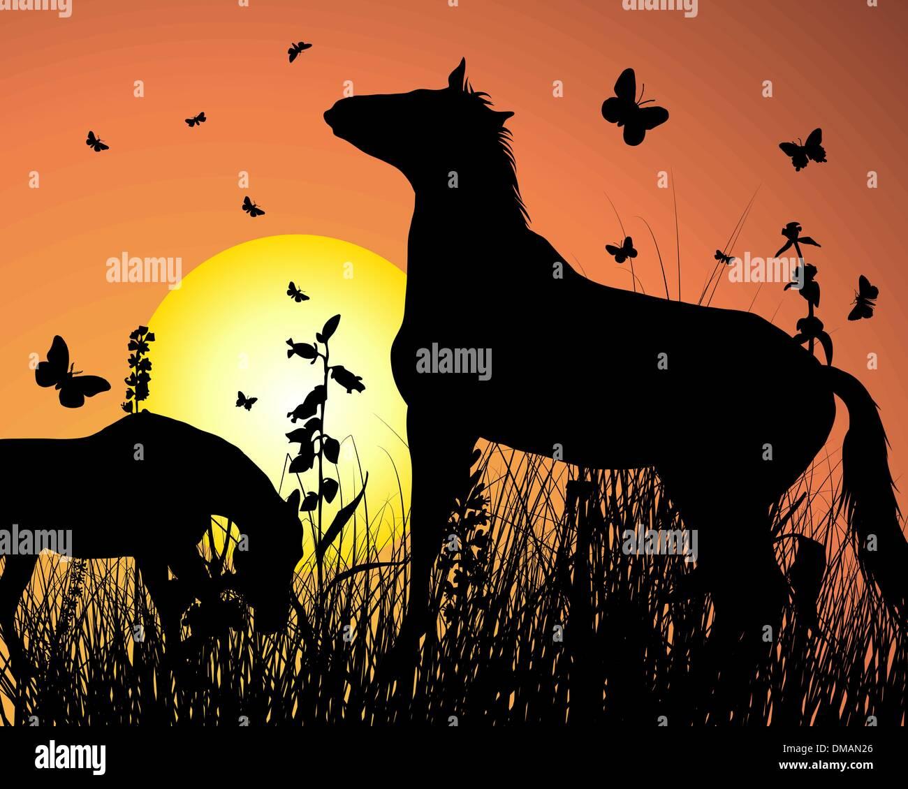 horse on sunset background - Stock Image