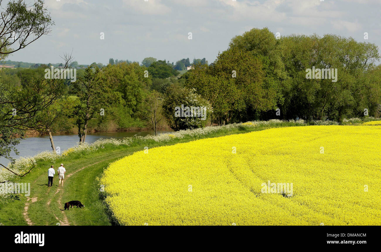 Walking by the river at Ross on Wye. Sunny weather in Herefordshire. 03.06.13 - Stock Image