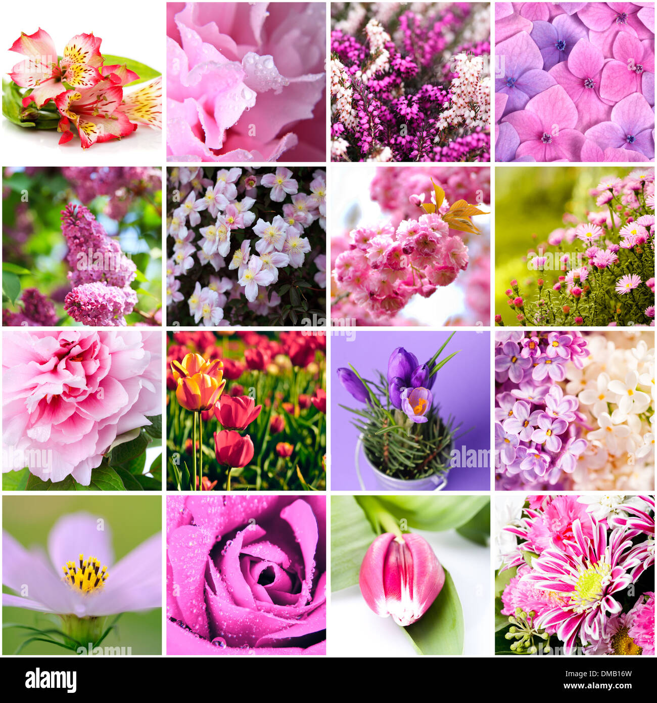 Closeup Beautiful Lilac And Pink Flowers Collage Stock Photo