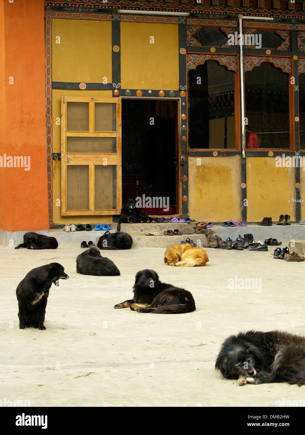 Dogs waiting for food at a monastery in Thimphu,Bhutan - Stock Image