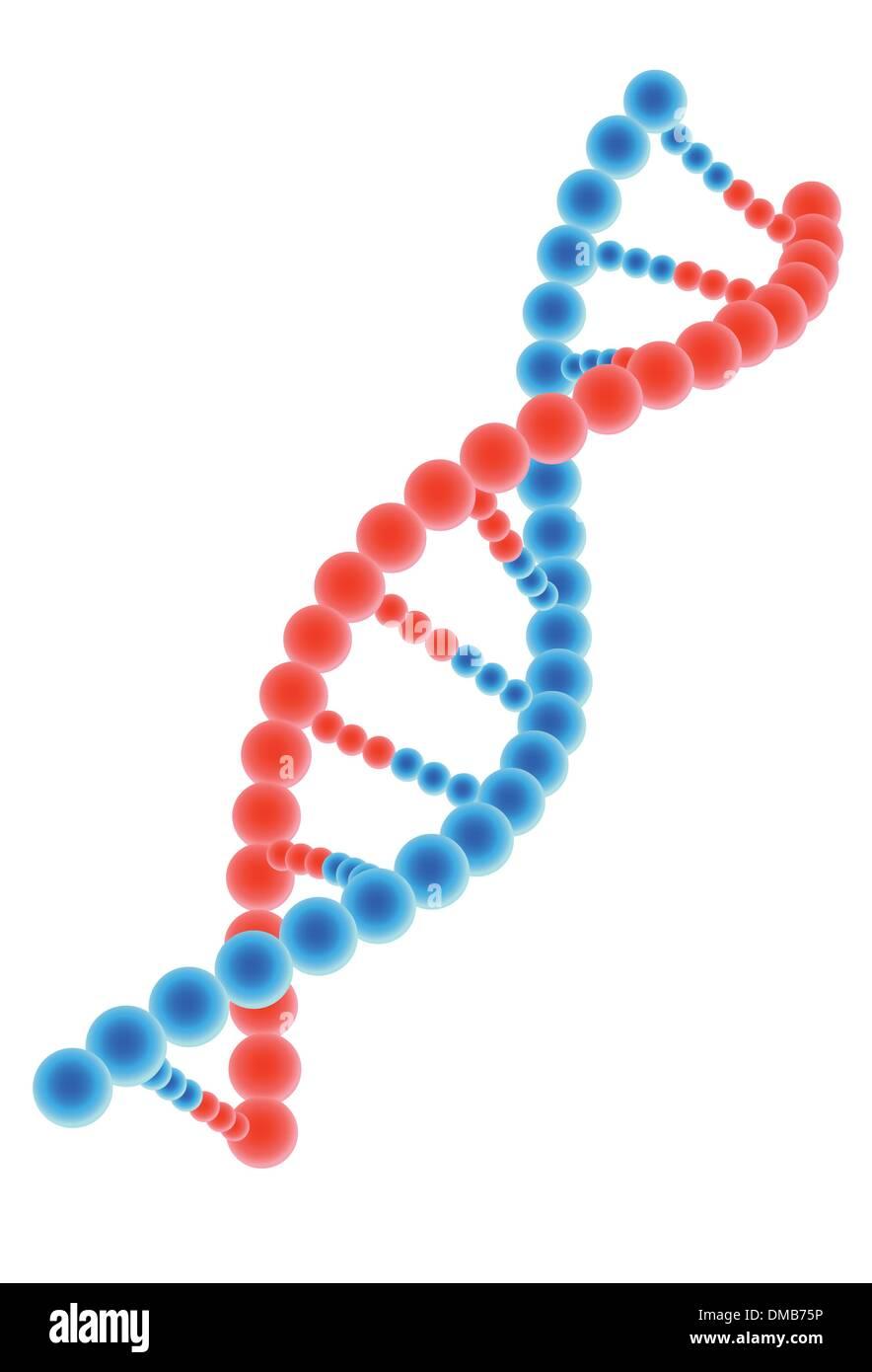 DNA model on white background - Stock Image