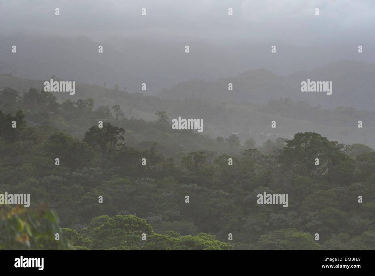 rain falling in a Costa Rican rain forest near lake Arenal. - Stock Image