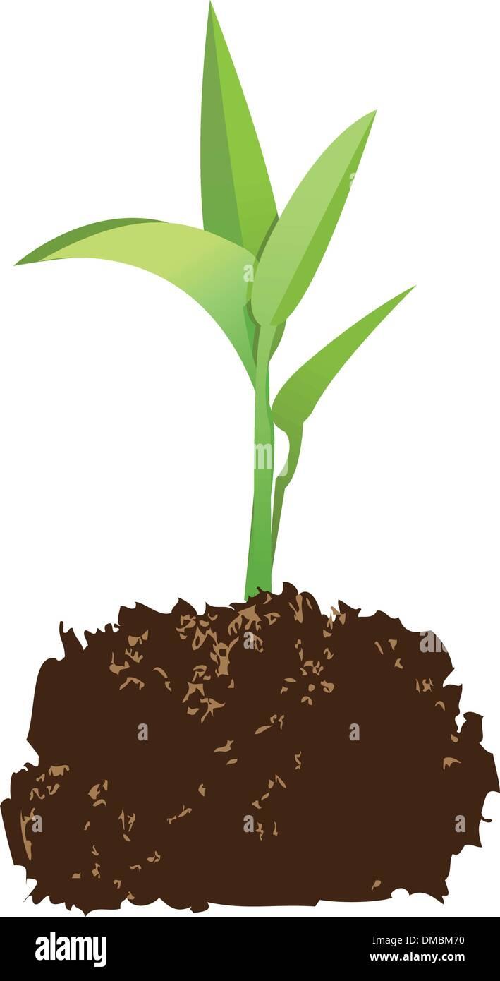 seedling - Stock Vector