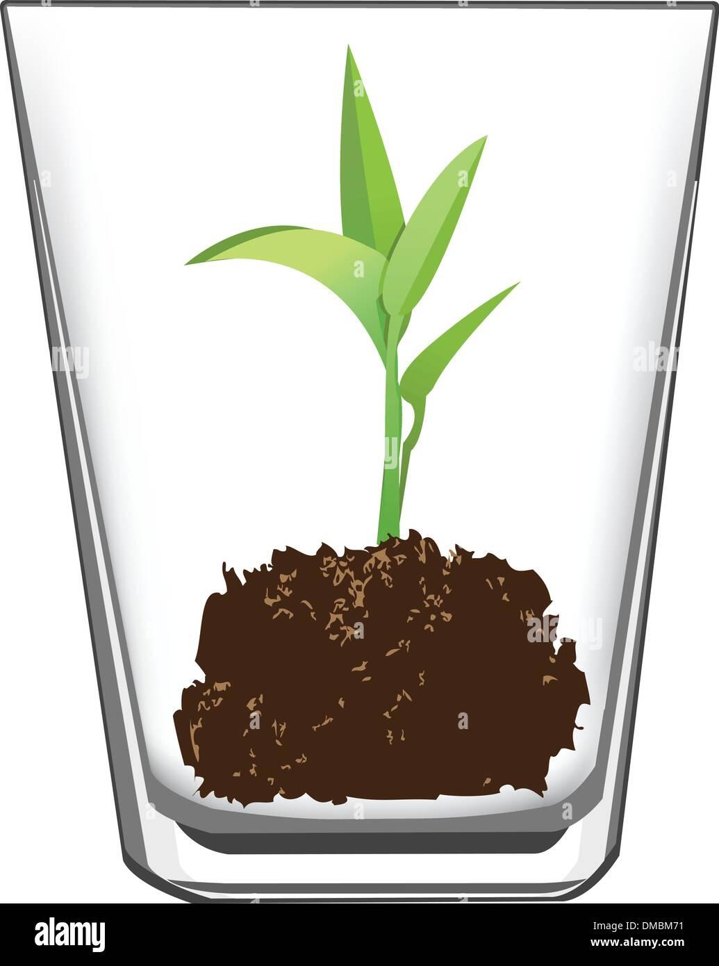 seedling in glass - Stock Vector