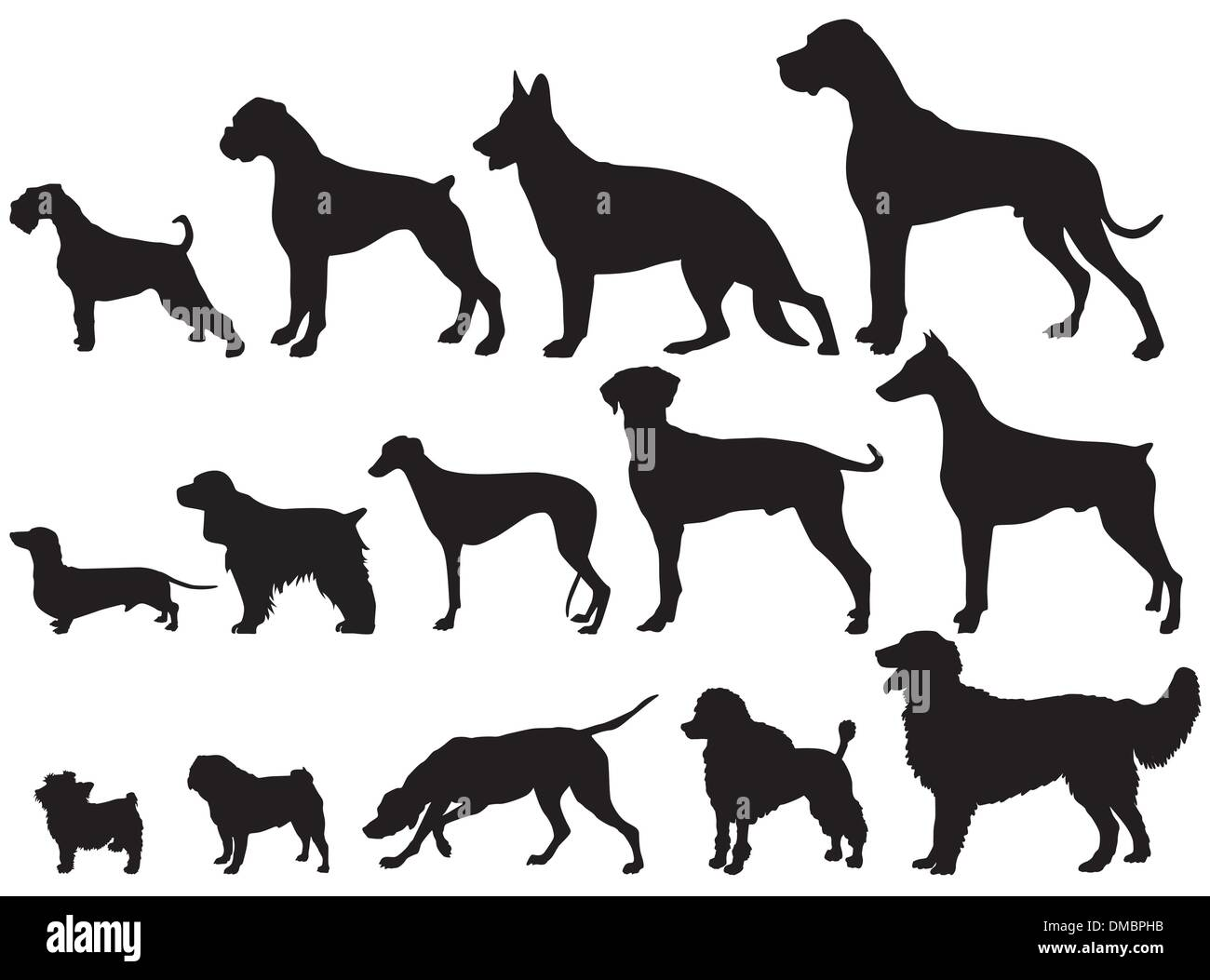 Dogs and Dog Breeds - Stock Image