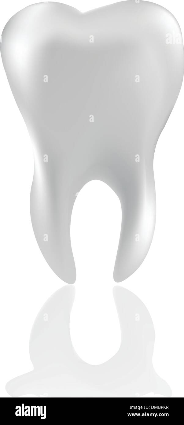Tooth  Isolated on white - Stock Image