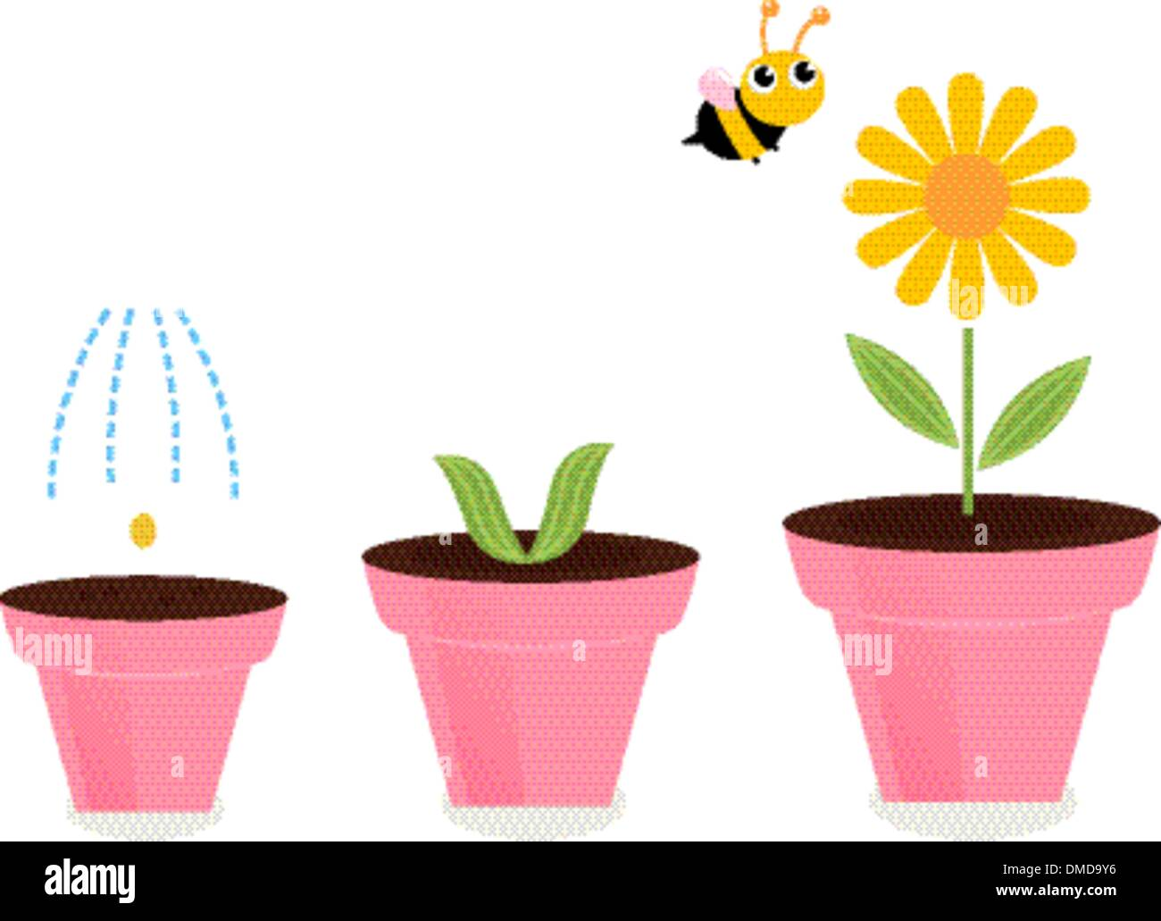 Flower stages stock photos flower stages stock images alamy flower in pots growth stages isolated on white stock image mightylinksfo