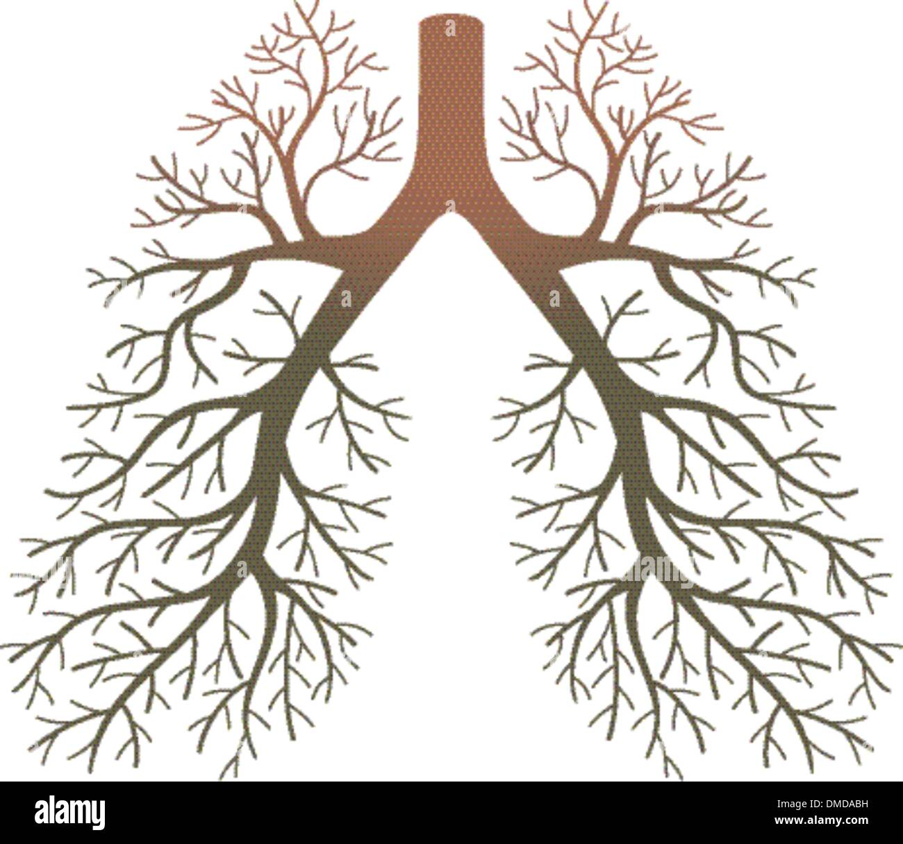 lungs healthy - Stock Image