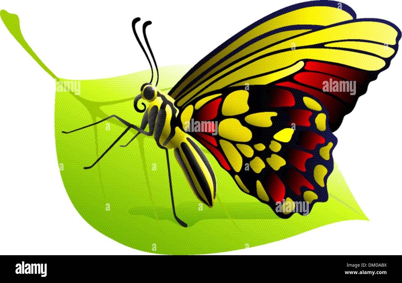 butterfly on a leaf - Stock Vector