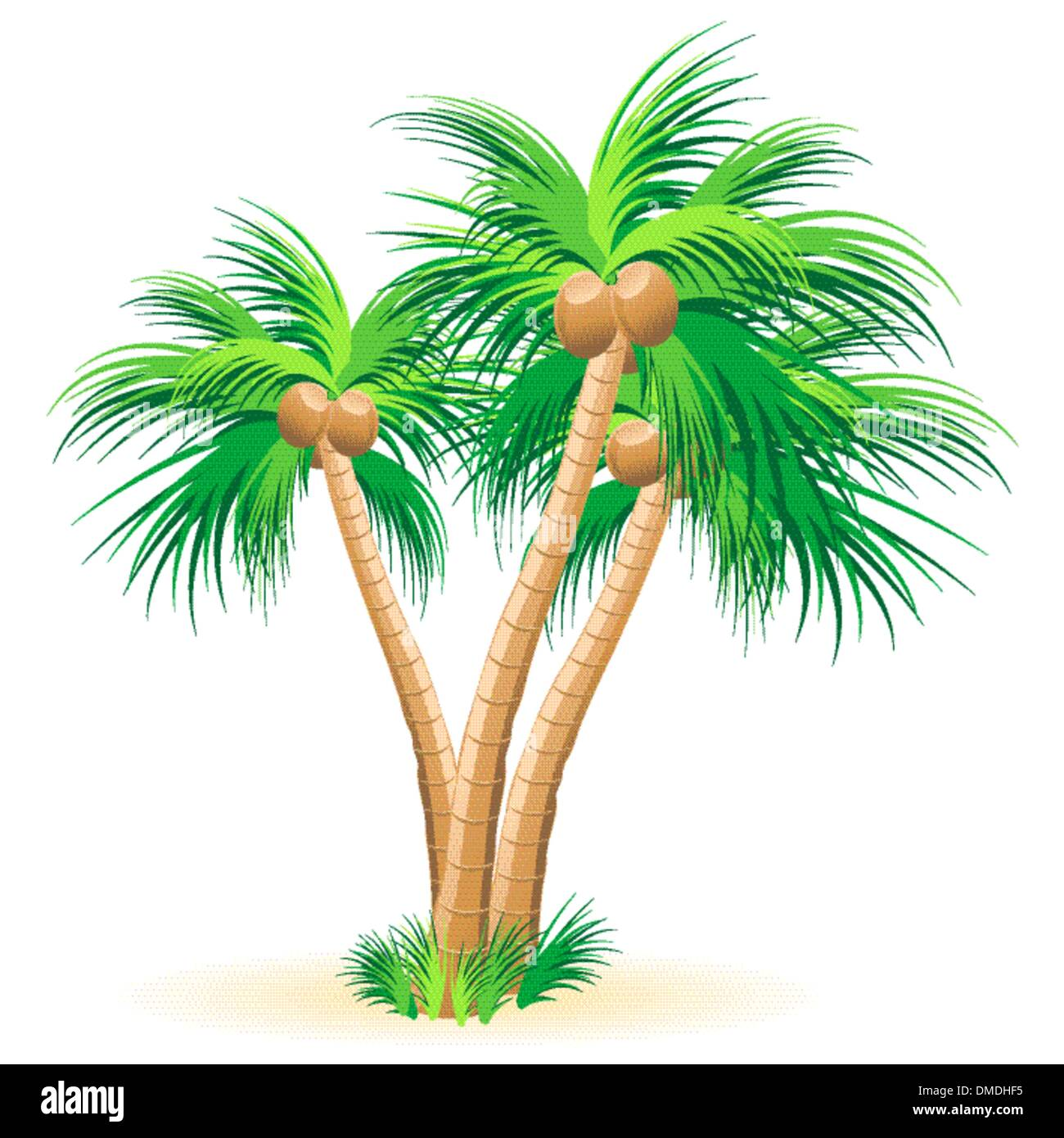 Tropical palm trees - Stock Image