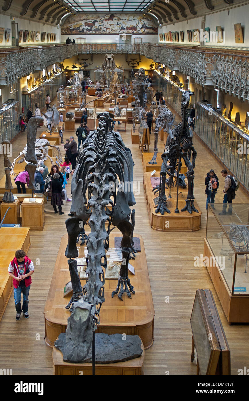 MUSEUM, GALLERY OF PALAEONTOLOGY AND COMPARATIVE ANATOMY, JARDIN DES ...